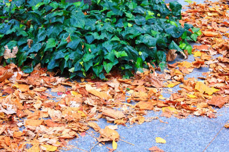 fell: Trail leaves fell Stock Photo