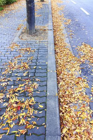 footway: Trail leaves fell Stock Photo