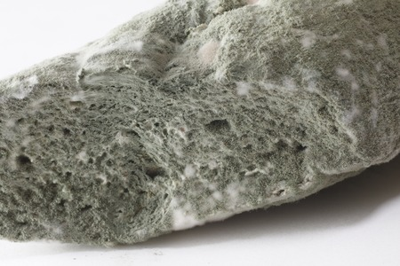 bread mold: Mold on bread Stock Photo