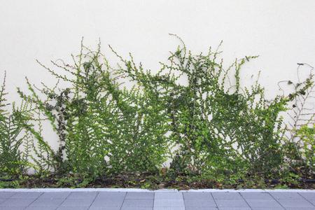 植樹キャンペーンに植えられた植物