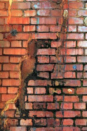 sprung: Building of cracked brick