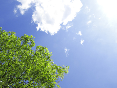 hygenic: Fresh green leaves and blue sky