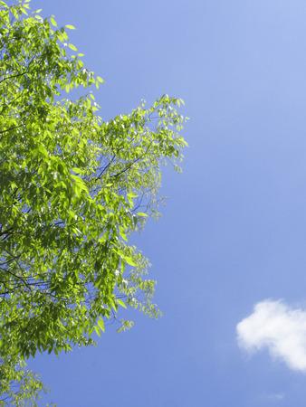 hygenic: Fresh green leaves and blue sky