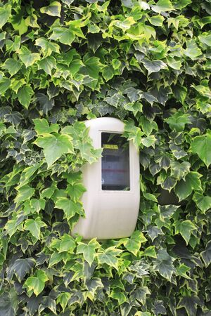 power meter: Leaves and power meter of ivy crawling on the walls of the building