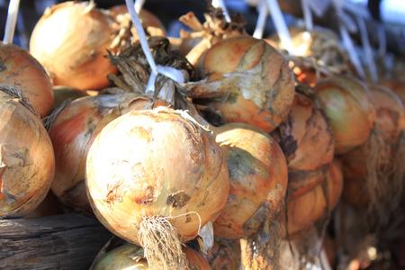 suspend: Onion hanging harvest