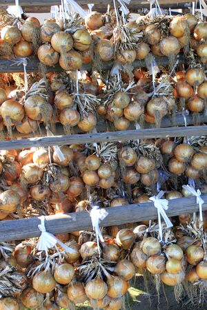 Onion hanging harvest Banco de Imagens - 46678954