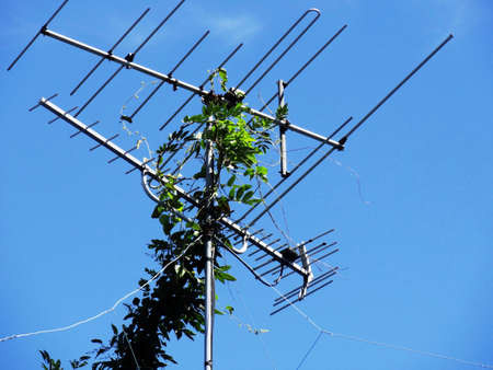 entangled: TV antenna that has entangled the ivy