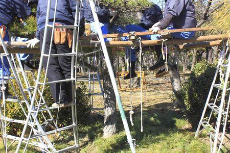 paysagiste: Élagage des arbres de pin