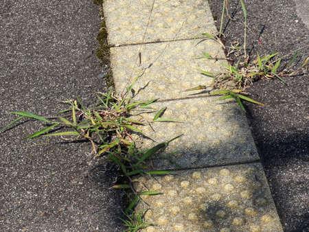 braille: Mala hierba que crece de entre el bloque Braille