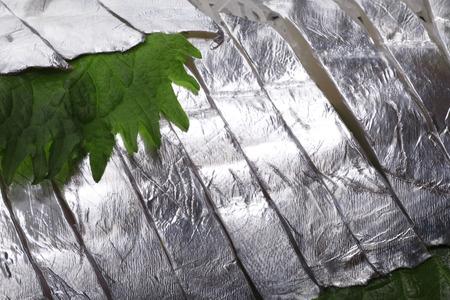 cutlass: Sashimi of cutlass fish