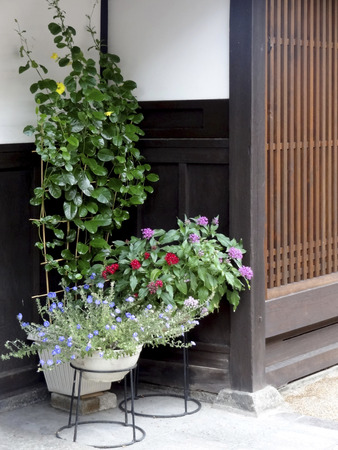front house: Front of the House plants