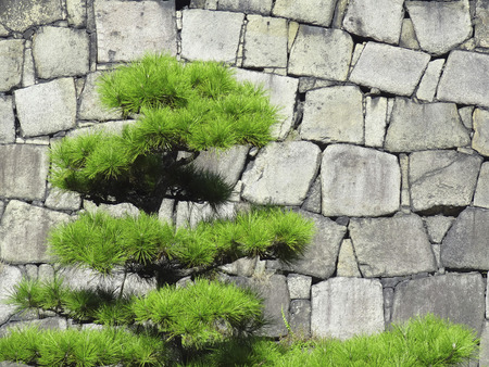 tower block: Osaka Castle tower block of stone wall and pine Stock Photo
