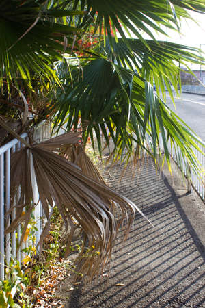 hindrance: Leaves of palm to block the sidewalk