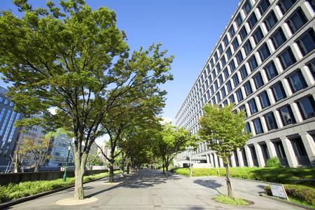 Osaka City Hall and street trees