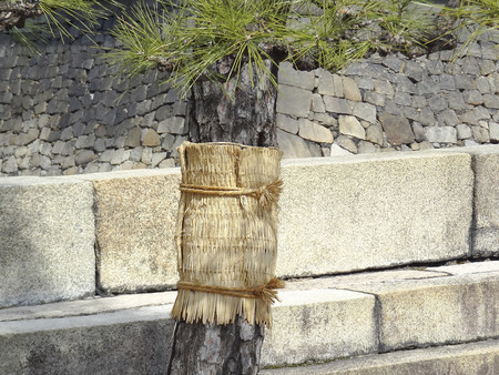 even: Even winding this pine