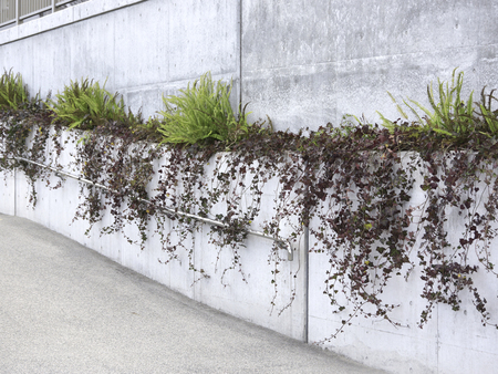 公共施設のコンクリート塀の緑化