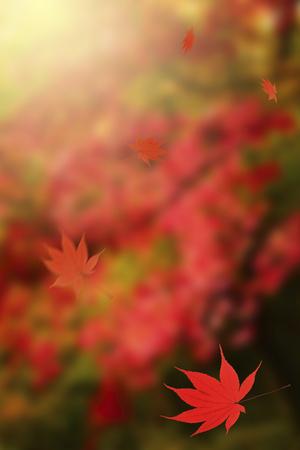 disperse: Autumn leaves