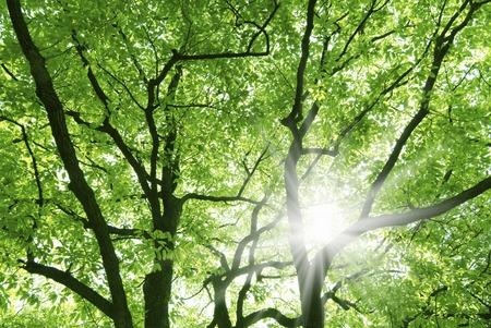 Fresh greenery and Sun Stock fotó
