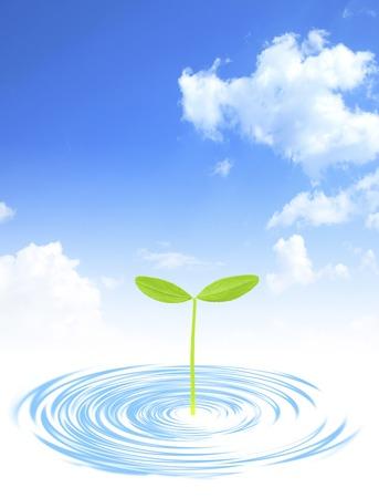 burgeoning: Futaba and ripples