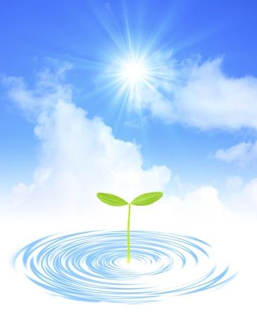 germination: Futaba and ripples