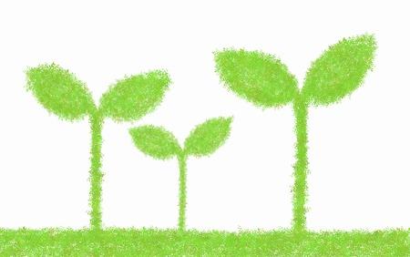germination: Futaba Stock Photo