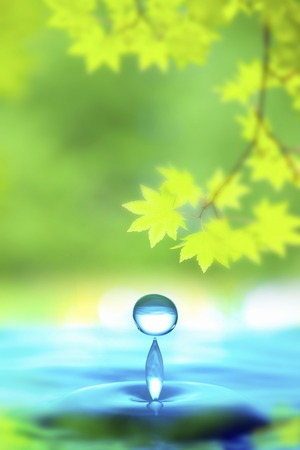 limbless: Drop of water and fresh green
