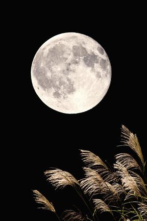 満月とススキ 写真素材
