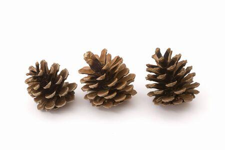 Pine cones Фото со стока