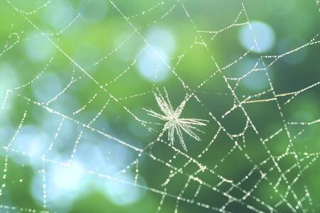 spiders web: Spiders Web
