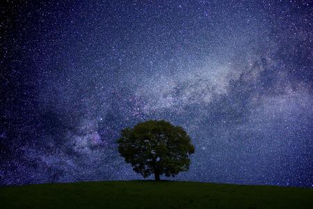 초원과 나무와 별이 빛나는 하늘 스톡 콘텐츠