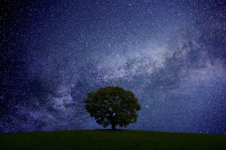 Grassland and trees and starry sky Banque d'images