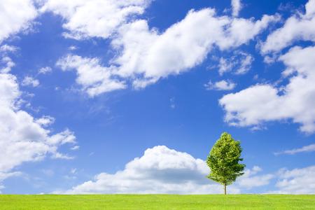 Grassland and blue sky and a single tree