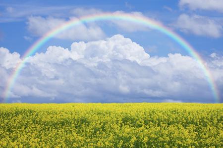 菜の花畑と青い空
