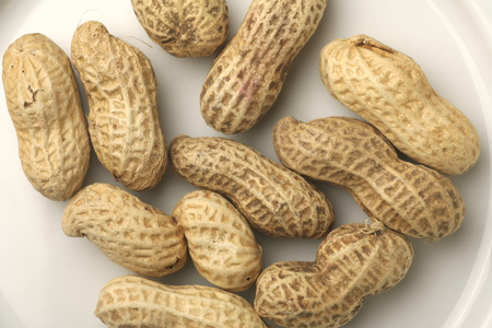 bean family: Peanut