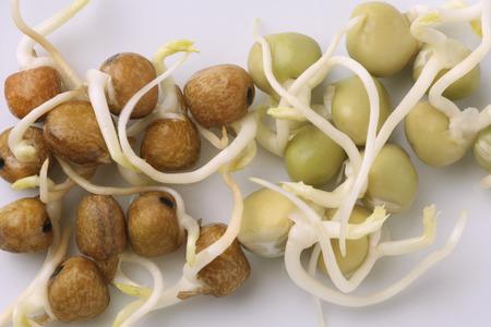 burgeoning: Beans
