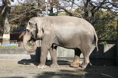 effigy: Elephant Stock Photo