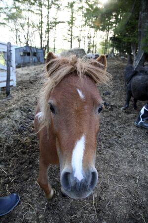 mammalian: Horse Stock Photo
