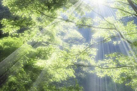 Frischer grüner Wald Standard-Bild - 39617809