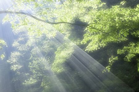 Frischer grüner Wald Standard-Bild - 39617810