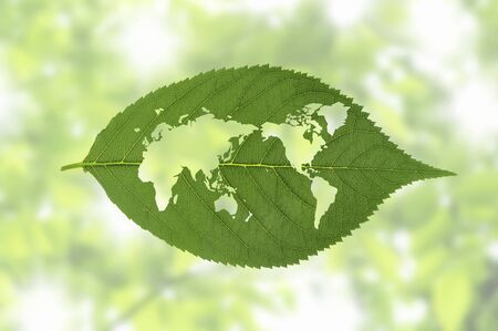 synthesis: World map of the leaf