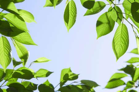 grounding: Fresh green