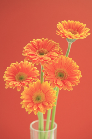 florid: Flower Gerbera Stock Photo