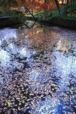 crimson colour: Autumn water
