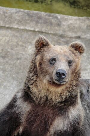 rancho: Ani oso oso pardo rancho