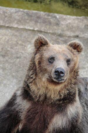 chacra: Ani oso oso pardo rancho