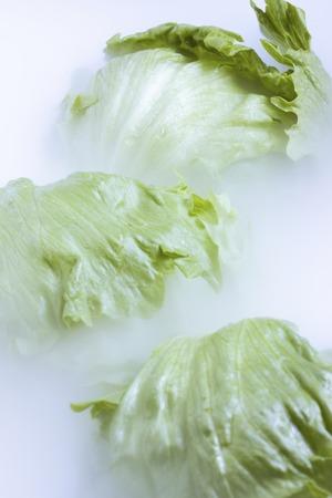 cold storage: Lettuce