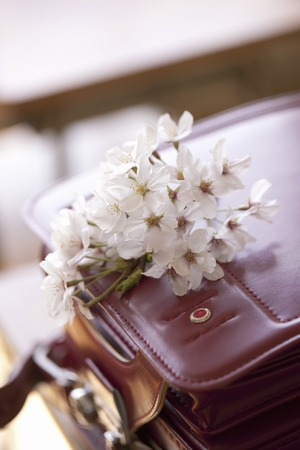 satchel: Satchel and cherry blossoms Stock Photo