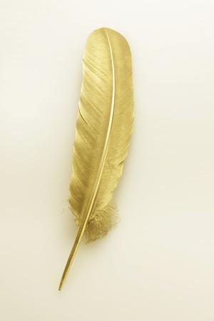 金の羽 写真素材
