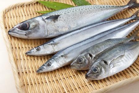 신선한 생선