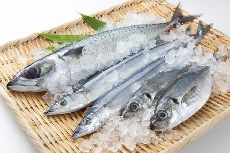 Fresh fish Stockfoto